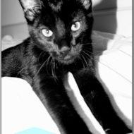 "My ""Hearing"" Cat……"